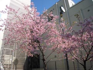 """title=""""桜が!""""alt=""""桜が!"""""""