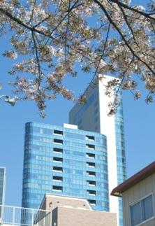 """title=""""YAMANOを包む満開の桜""""alt=""""YAMANOを包む満開の桜"""""""